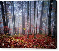 Acrylic Print featuring the photograph Fall Forest In Fog by Elena Elisseeva