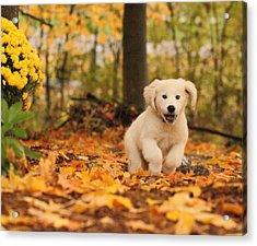 Fall Frolic  Acrylic Print