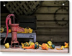Fall Gourds Acrylic Print