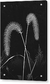 Fall Grass 2 Acrylic Print by Mark Fuller