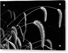 Fall Grass 3 Acrylic Print by Mark Fuller
