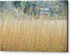 Acrylic Print featuring the photograph Fall Grass by AnnaJanessa PhotoArt