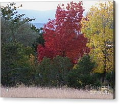 Fall In Santa Fe Acrylic Print by Brian  Commerford