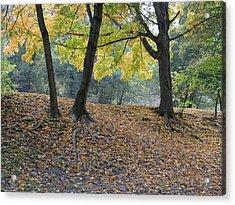 Fall In Stony Brook Acrylic Print by Raju Alagawadi
