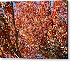 Fall In The Blue Ridge Mountains Acrylic Print by Flavia Westerwelle