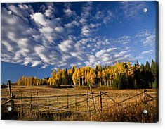 Fall In The Cariboo Acrylic Print by Detlef Klahm