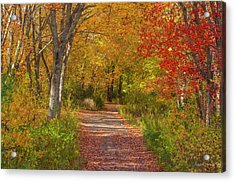 Fall In The Maritimes Acrylic Print by Roger Lewis
