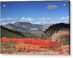 Fall In  Ute Trail  Acrylic Print