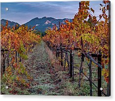 Fall In Wine Country Acrylic Print by Bill Gallagher