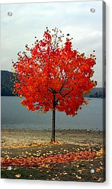 Fall Is Here Acrylic Print by Dennis Curry