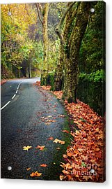 Fall Landscape Acrylic Print by Carlos Caetano