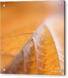 Acrylic Print featuring the photograph Fall Leaf by Elena Nosyreva