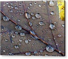 Fall Leaf Acrylic Print by Juergen Roth
