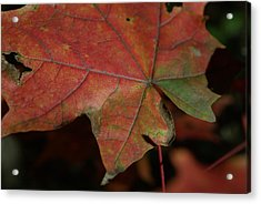 Fall Leaves 1 Acrylic Print by Eric Workman