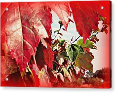 Fall Leaves #10 Acrylic Print