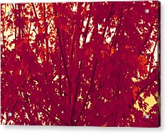 Fall Leaves #2 Acrylic Print