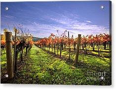 Fall Leaves At The Vineyard Acrylic Print