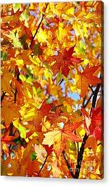 Fall Leaves Background Acrylic Print by Carlos Caetano