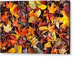 Fall Leaves On Forest Floor Acrylic Print