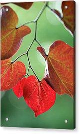Redbud Acrylic Print
