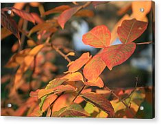 Fall Leaves Acrylic Print by Linda Ebarb