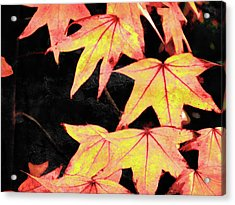Fall Leaves Acrylic Print by Robert Ball
