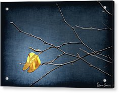 Fall Leaves Study 2 - Last Leaf - Signed Limited Edition Acrylic Print