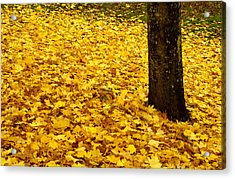 Fall Leaves Acrylic Print by Val Jolley