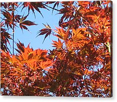 Fall Leaves Acrylic Print by Valerie Josi