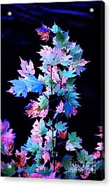 Fall Leaves1 Acrylic Print