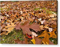 Acrylic Print featuring the photograph Fall by Lora Lee Chapman