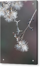 Acrylic Print featuring the photograph Fall - Macro by Jeff Burgess