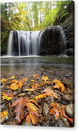 Fall Maple Leaves At Hidden Falls Acrylic Print