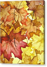 Fall Maple Leaves Acrylic Print by Christina Meeusen