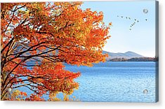 Fall Maple Tree Graces Smith Mountain Lake, Va Acrylic Print