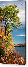Acrylic Print featuring the photograph Fall Oak Tree by Elena Elisseeva