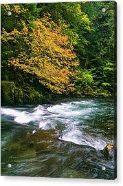 Fall On The Clackamas River, Or Acrylic Print