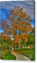Fall On The Walk Acrylic Print by Robert Pearson