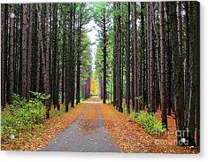 Fall Pines Road Acrylic Print