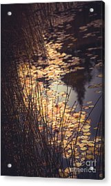 Acrylic Print featuring the photograph Fall Pond by The Forests Edge Photography - Diane Sandoval