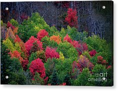 Fall Poppers Acrylic Print