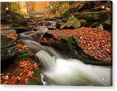 Fall Power Acrylic Print by Evgeni Dinev