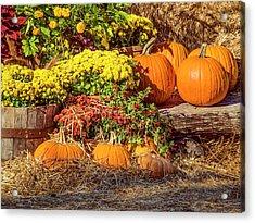 Fall Pumpkins Acrylic Print by Carolyn Marshall