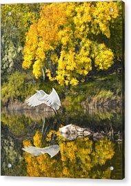 Fall Reflections Acrylic Print by Chuck Brittenham
