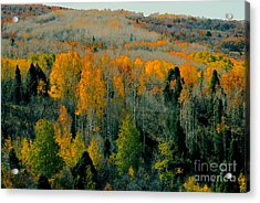 Fall Ridge Acrylic Print by David Lee Thompson