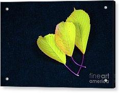 Acrylic Print featuring the photograph Fall Season Colors by Kennerth and Birgitta Kullman