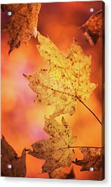 Fall Reveries Acrylic Print