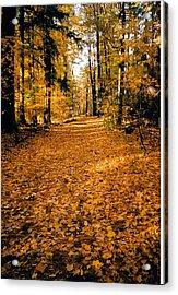 Fall Acrylic Print by Stephanie Moore