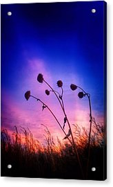 Fall Sunrise Acrylic Print by Tim Abshire