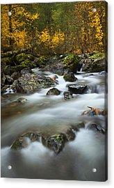 Fall Surge Acrylic Print by Mike  Dawson